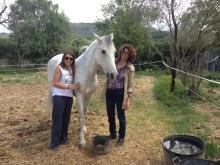 2014_Nova casa, a Arre Cavalls