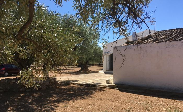 Entre oliveres